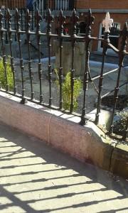 15_garden_restoration_dublin